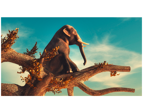 campaining-icon